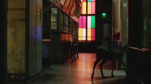 animals-you-saw-at-berghain_after-hours-film_1