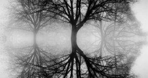 ansel-adams-tree-love-ansel-adam-a-pioneer-in-s